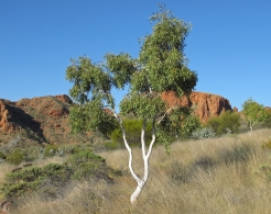 Australija_Augusta_2011_1