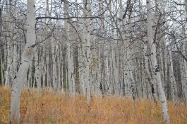 Colorado_2012_11