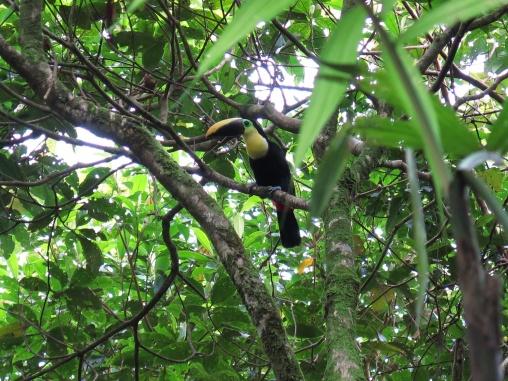 Costa_Rica_2014_10