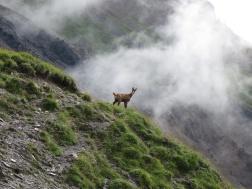 Eiropas_Alpos_2014_2_7