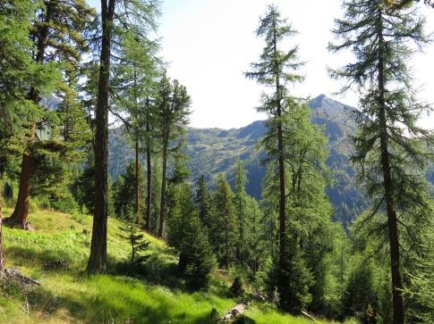 Eiropas_Alpos_2014_2_8