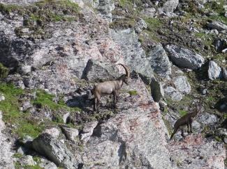 Eiropas_Alpos_2014_2_9