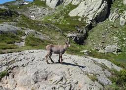 Francu_Kalnos_(Les_Alpes)_3