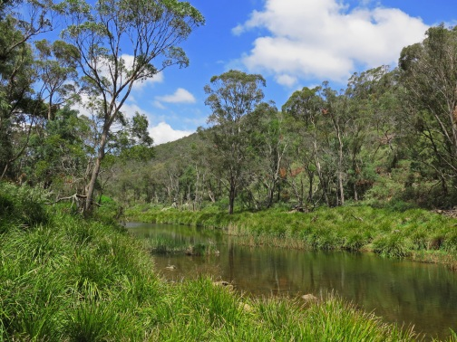 Tarlo River, Cockbundoon Nature Reserve