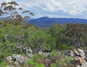 View from Mt Palerang, Tallaganda National Park
