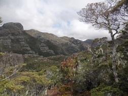 Lockett Range area, Kahurangi National Park