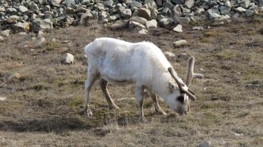 Svalbardas_Kalnos_2012_15