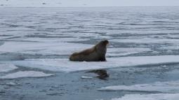 Svalbardas_Kalnos_2012_4