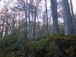 Tasmania_un_Australija_2014_1