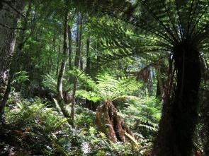 Tasmania_un_Australija_2014_10