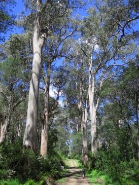 Tasmania_un_Australija_2014_22