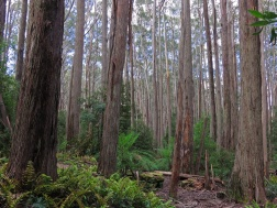 Tasmania_un_Australija_2014_23