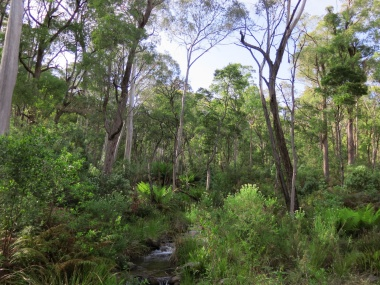 Tasmania_un_Australija_2014_27