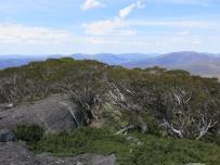 Tasmania_un_Australija_2014_37