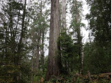 Tasmania_un_Australija_2014_9