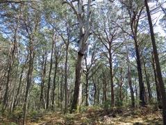 Tallaganda National Park, NSW