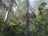 Hylands cliffs area, near Boolijong Creek, NSW