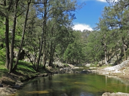 Grove Creek, Abercrombie Karst Conservation Area, NSW