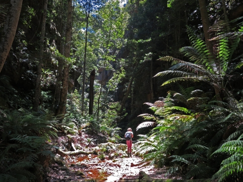 Starlight Canyon, Wolgan area, Wollemi National Park, NSW