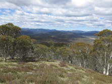 Near Mt Nungar, Tantangara area, Kosciuszko National Park, NSW