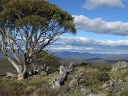On Mt Nungar, Tantangara area, Kosciuszko National Park, NSW