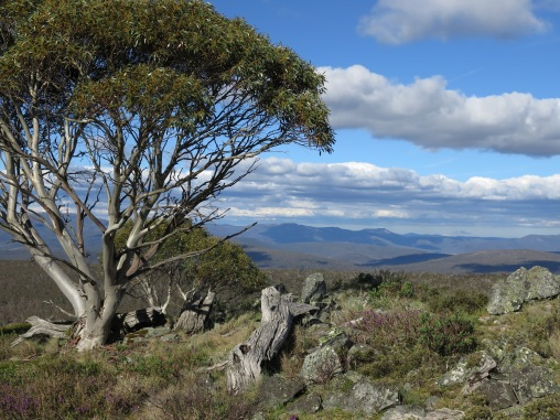 On Mt Nungar, Tantangara area, Kosciuszko National Park, NSW