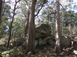 Near Mount Tumatbulla, Tallaganda National Park, NSW