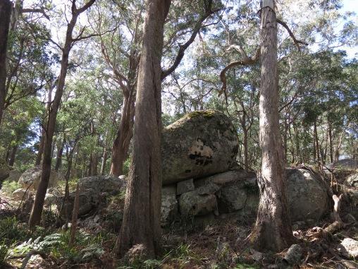 Near Mount Tumatbulla, Tallaganda National Park, NSW