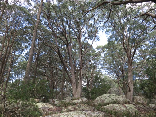 On the South Black Range, Tallaganda National Park, NSW