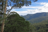 Southern slopes of the Barrington Tops, Barrington Tops National Park, NSW