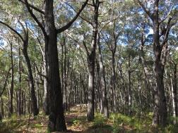 Open ridge walking above Woila Creek, Deau National Park, NSW